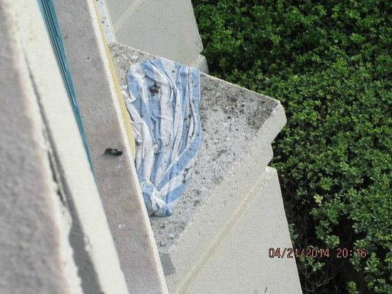 Hilton Daytona Beach / Ocean Walk Village: a beach towel that looks like it has been on the ledge for months, so much mold on it..