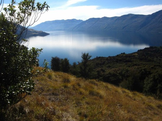 Eco Wanaka Adventures : view from the island