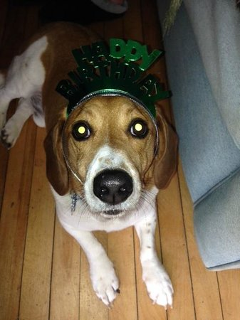 Our dog, enjoying the festivities at the Hilltop Inn