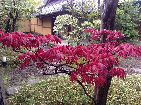 Yufuin Santokan: Beautiful garden