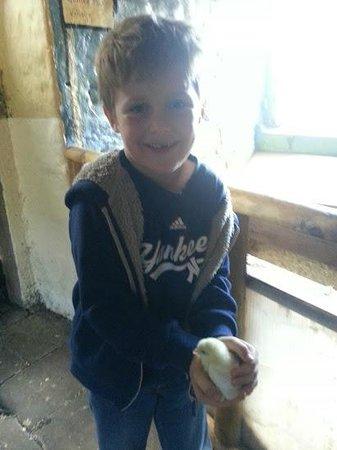 St Leonards Farm Park: enjoying holding the animals