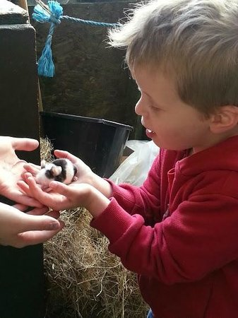 St Leonards Farm Park: getting up and close to all the animals