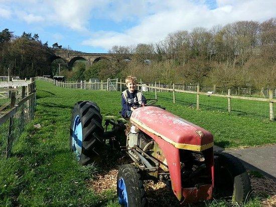 St Leonards Farm Park: well kept grounds