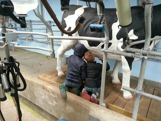 St Leonards Farm Park: trying out a spot of milking