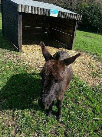 St Leonards Farm Park: Donkey