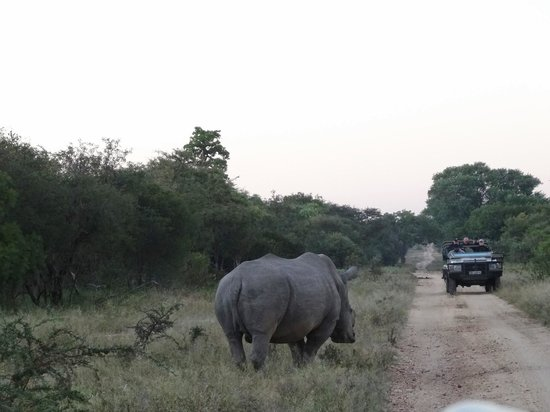 Vuyani Safari Lodge: Bumped into this guy sleeping by the side of the road