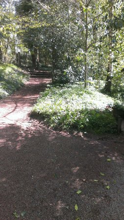 The Pinetum Lodge: The walk down from the gates to the cabin