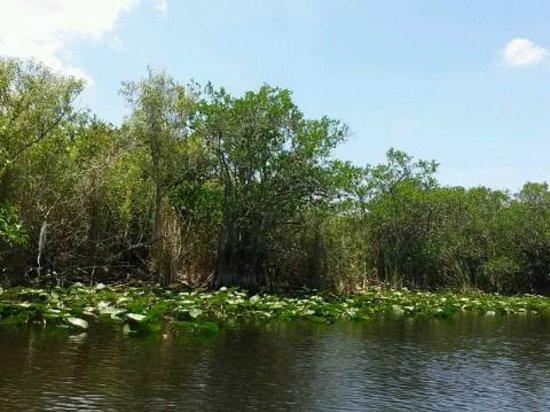 Everglades Holiday Park : Scenery - Nature