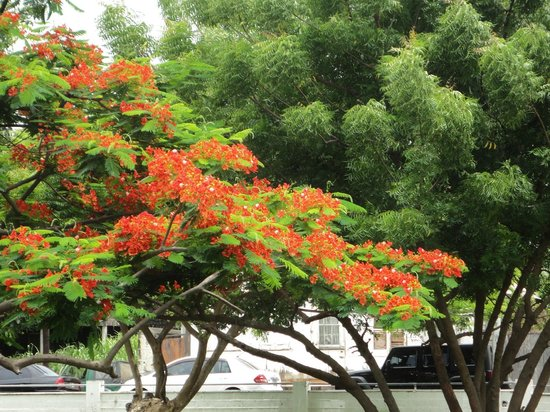 Independence Square: Gorgeous trees