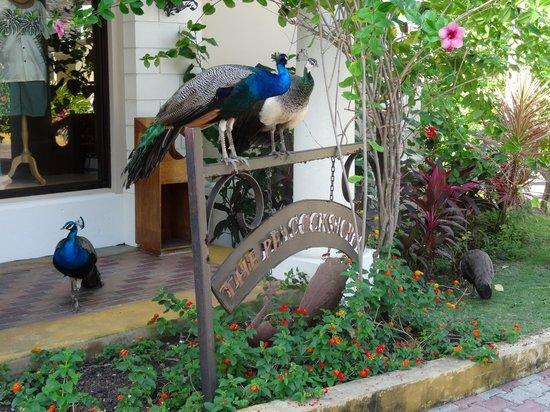 Sandals Royal Plantation : Peacock shop