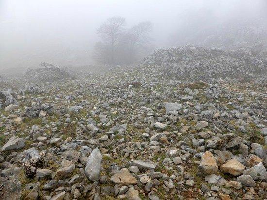 Parco delle Madonie : Schaurig schön bei Nebel