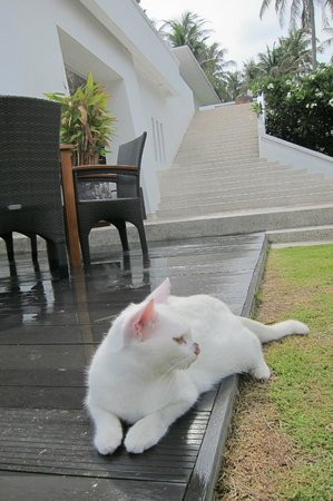 The Racha : Sweet island cat