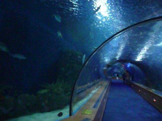 Oceanogràfic: Стеклянные коридоры океанариума