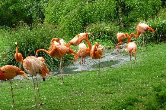 Flamingoes at menagerie du jardin des plantes for Plantes du jardin