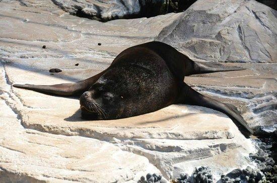 Oceanogràfic: Rilassarsi al sole