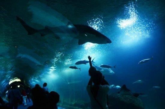 Oceanografic: Un mondo da scoprire anche per i bambini
