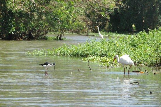 Rio Istian: lots more birds!