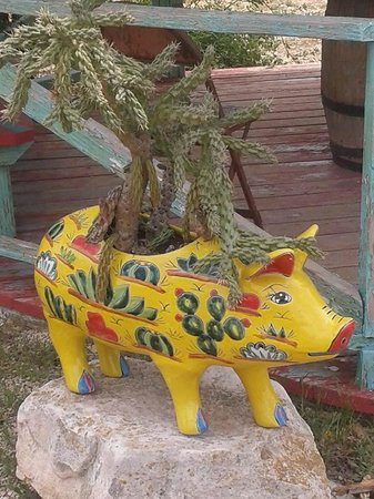 Dixie Dude Ranch : Texans always grow cactus inside pigs