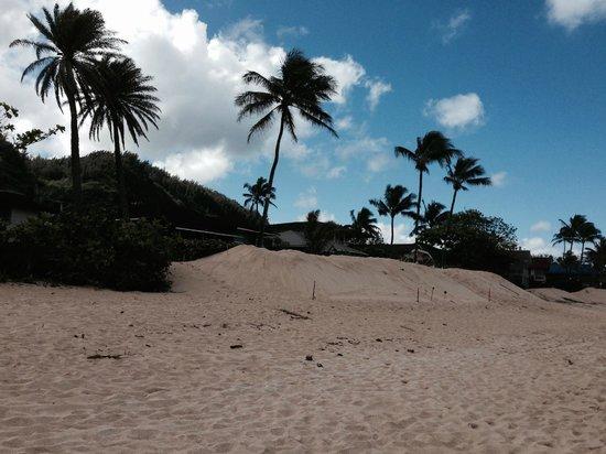 Sunset Beach Park : 須永ビーチハウスの境界まで押し寄せています。