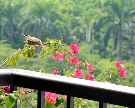 Sofitel Philippine Plaza Manila: Morning Balcony Visitor