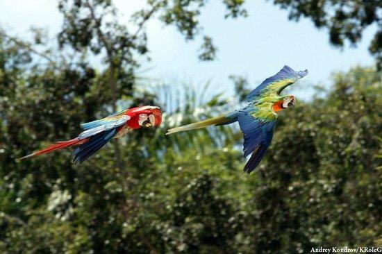 Jardines de Nivaria - Adrian Hoteles: Loro-park