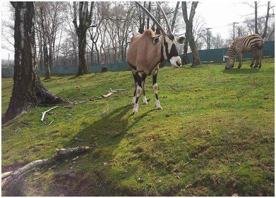 Safari Park : Safari