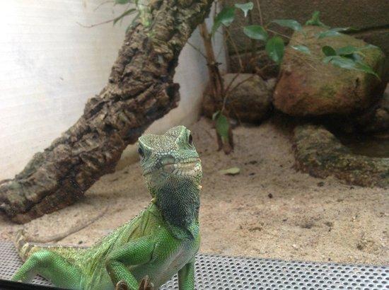 Berlin Zoological Garden : Позирует =)
