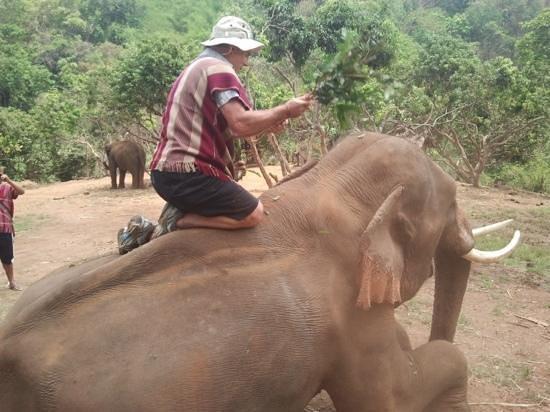 Patara Elephant Farm - Private Tours : brushing the elephant