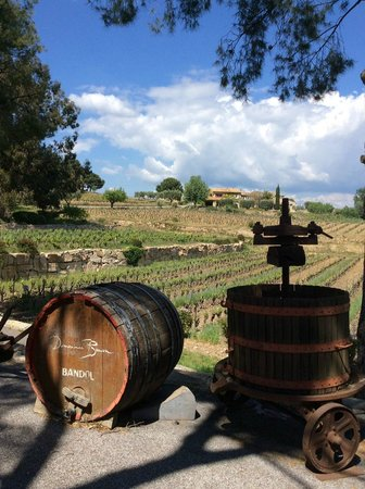 Provence Wine Tours : Domaines Bunan