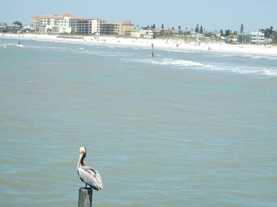 Clearwater Beach: View north from the pier