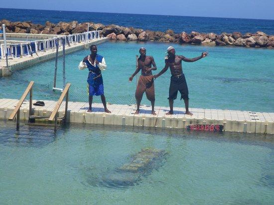 Dolphin Cove: Shark Show