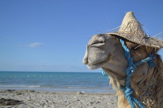 Djerba Holiday Beach : plages ...