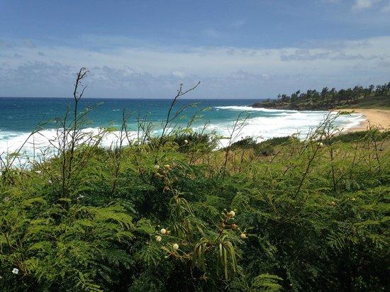 Coconut Coasters Beach Bike Rentals : bike ride along the east coast