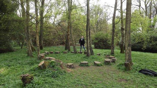 Tree Stump Stepping Stones