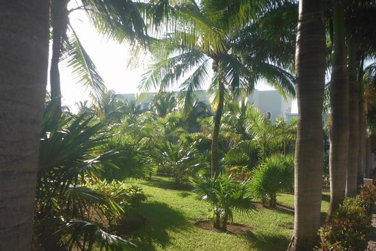 Dreams Tulum Resort & Spa: garden