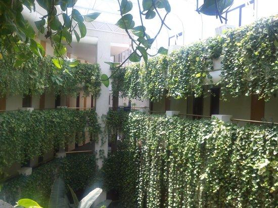 Hotel Gala: Vegetación