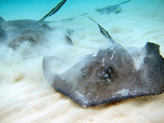 Fat Fish Adventures : Sweet Southern Stingrays