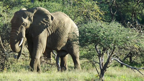 Tambuti Lodge: Elephant Day