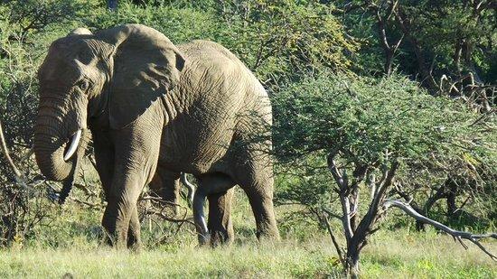 Tambuti Lodge : Elephant Day