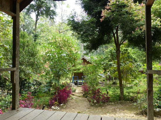 Rain Forest Lodge