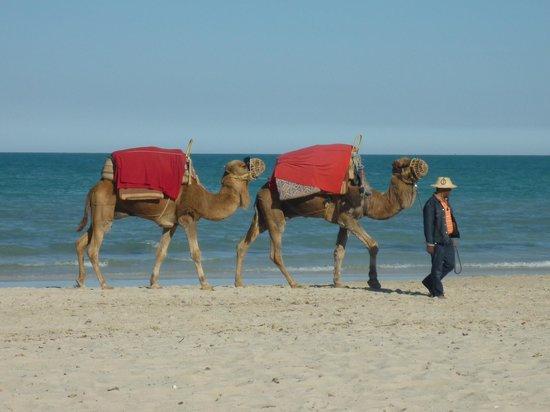 Vincci Helios Beach : Am Strand