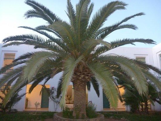 Vincci Helios Beach : Palme in der Mitte unseres Nebenhauses
