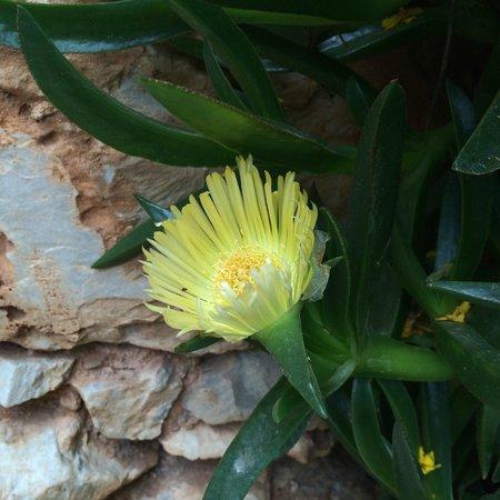 National Garden : флора