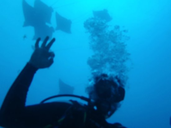 Planet Scuba Mexico: A-OK with the 8 Eagle Rays Above the C-56