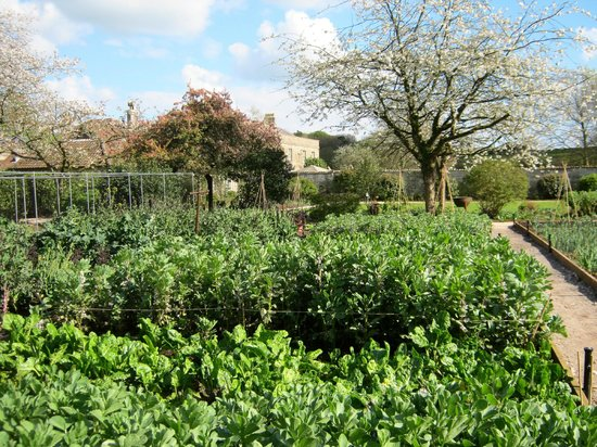 The Pig near Bath: Maturing vegetables in the kitchen gardens
