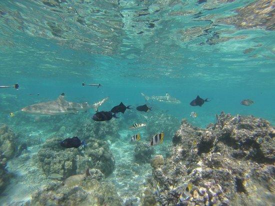 Marc's Picnic Island Motu Tour : L'Aquarium