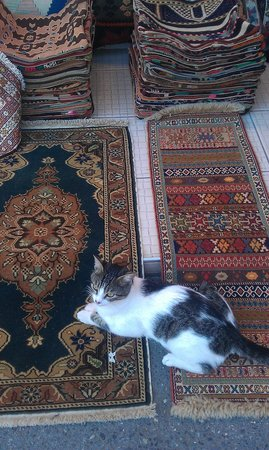 Troy Rug: happy istanbul cat