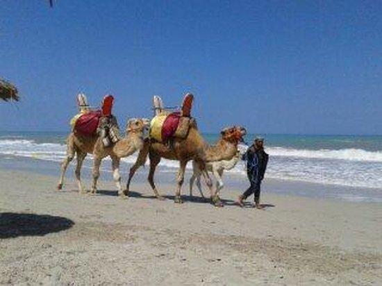 Hotel Isis Thalasso & Spa : La plage
