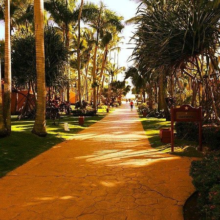 Iberostar Bavaro Suites: Resort Grounds