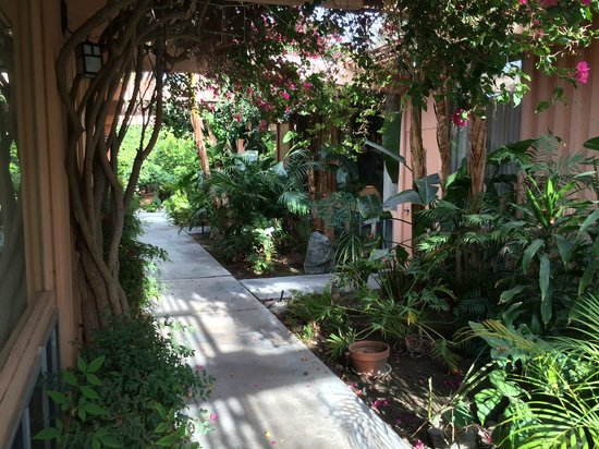 Triangle Inn Palm Springs: lush grounds leading to the rooms